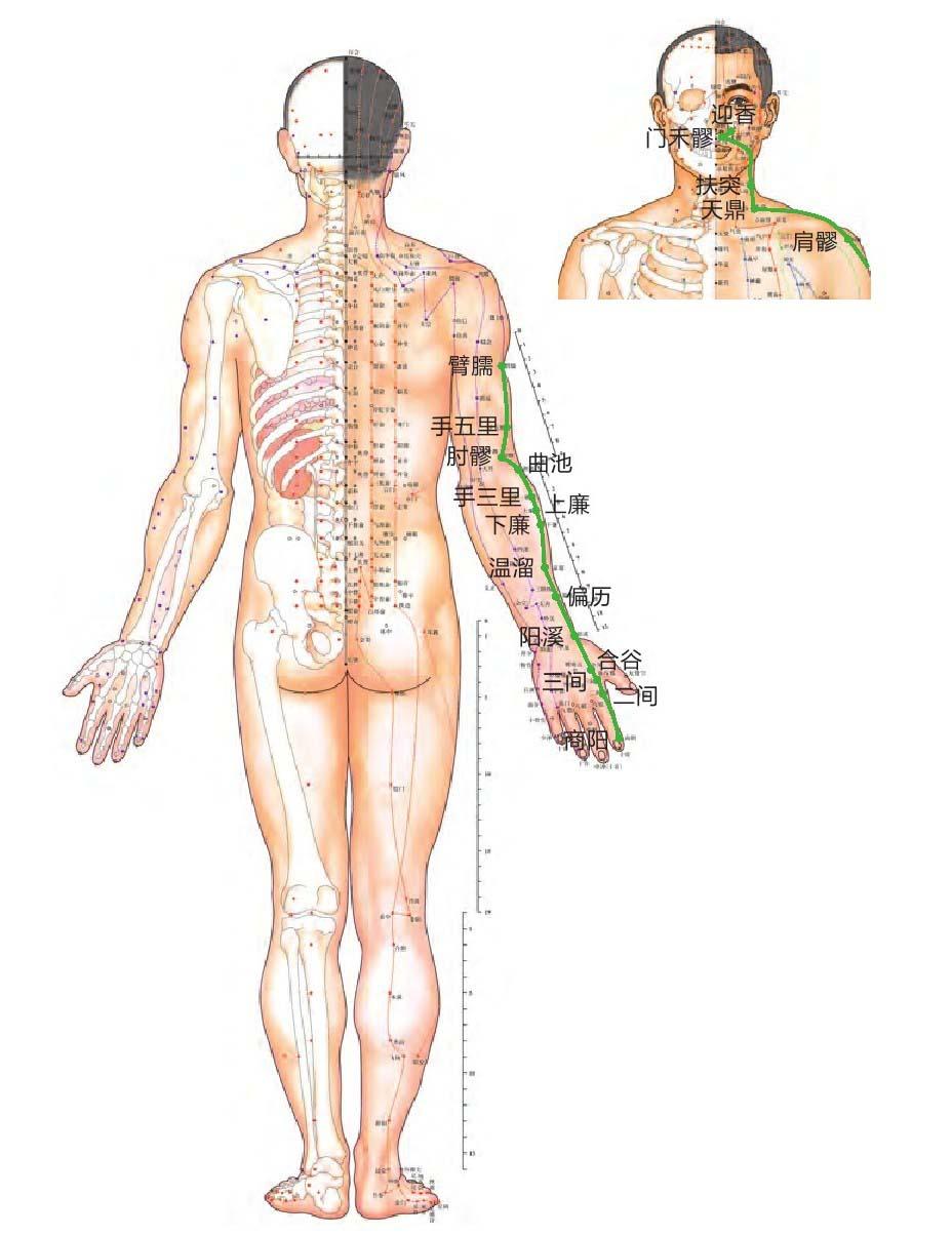 大肠经位置图