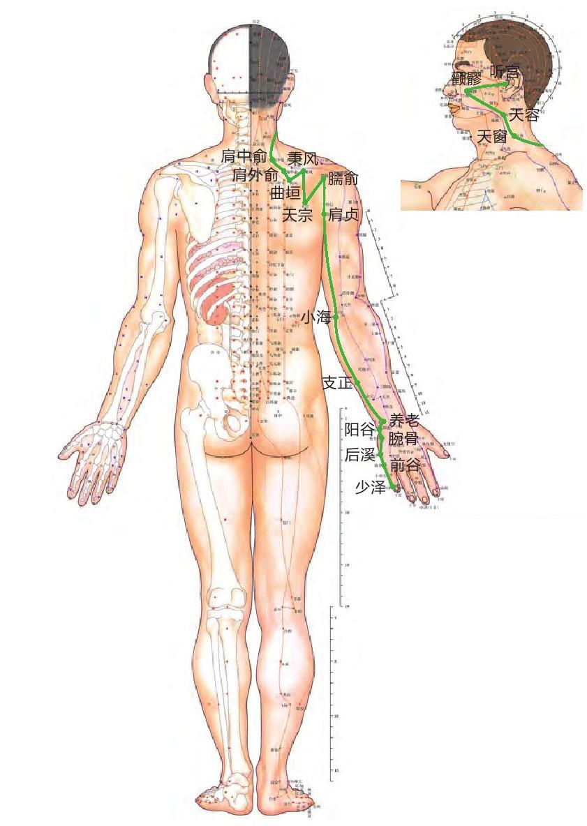 小肠经位置图