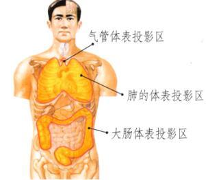 肺和大肠保健