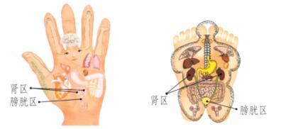 肾和膀胱保健