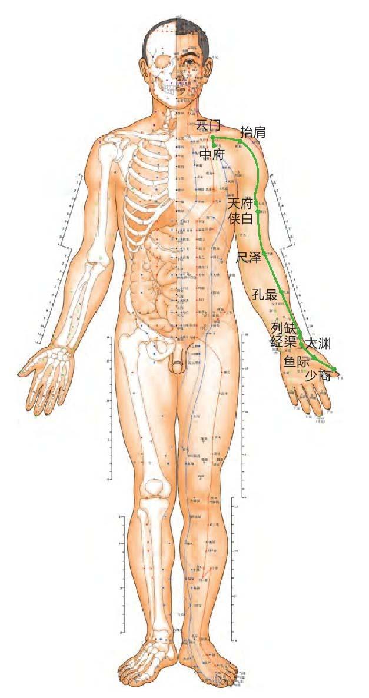 肺经位置图