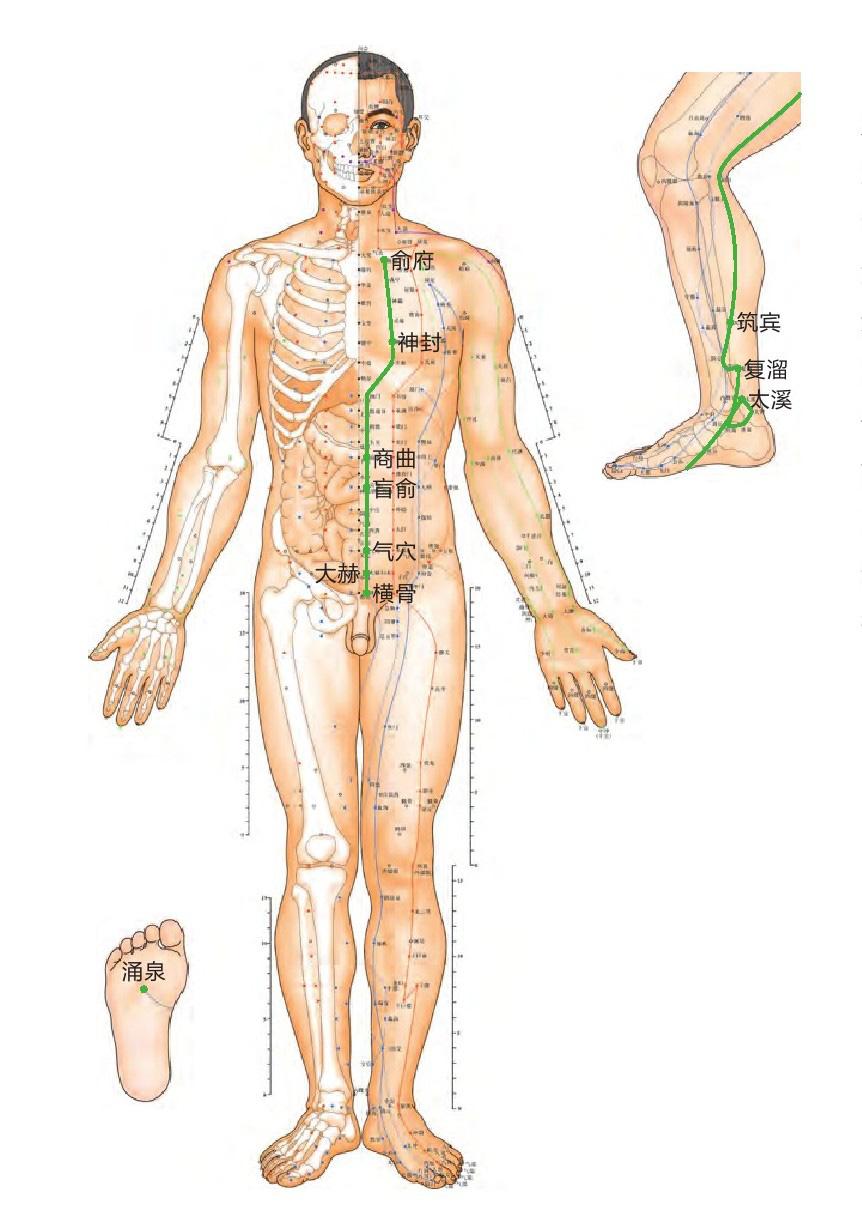 肾经位置图
