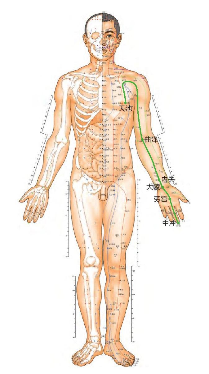 心包经位置图