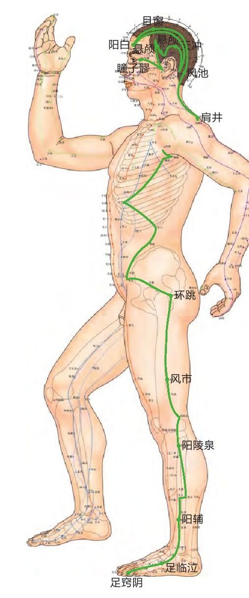 胆经位置图