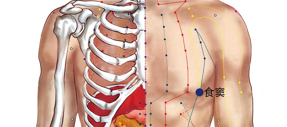 食窦穴位置图