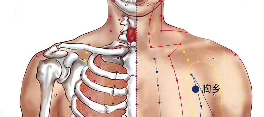 胸乡穴位置图