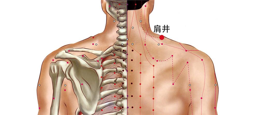 肩井穴位置图