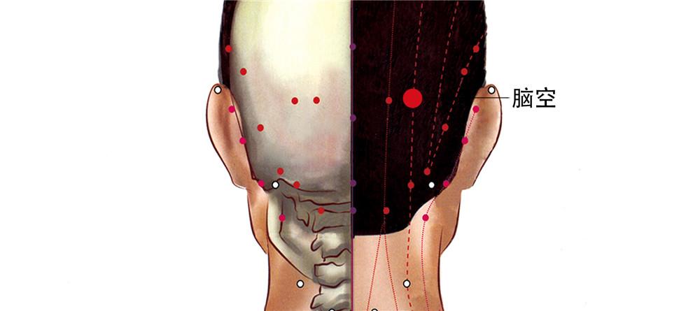 脑空穴位置图
