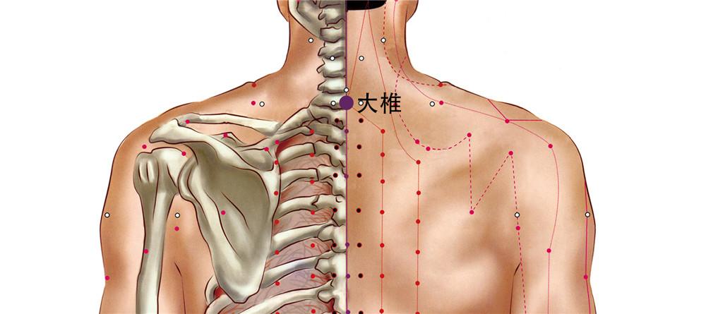 大椎穴位置图