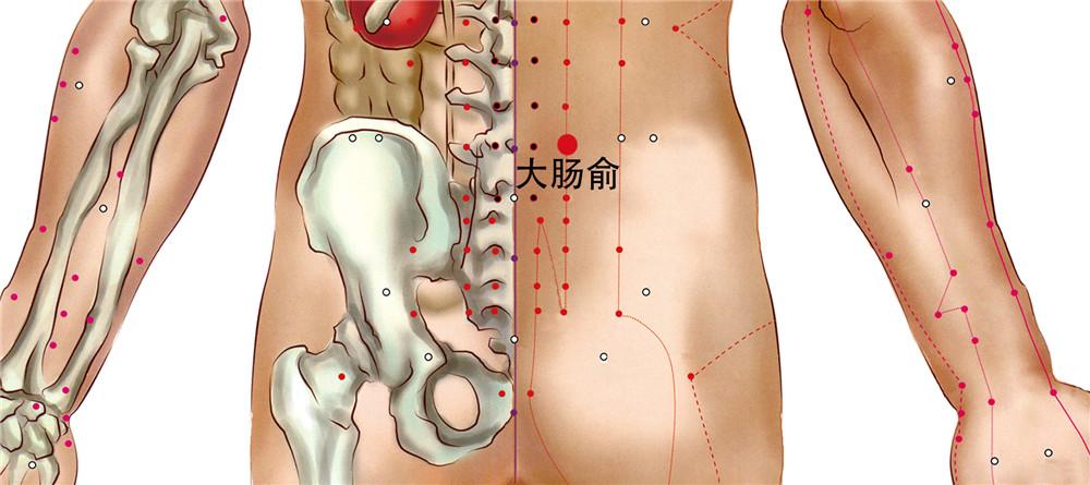 大肠俞穴位置图