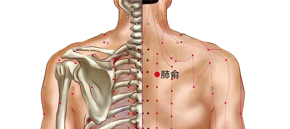 肺俞穴位置图
