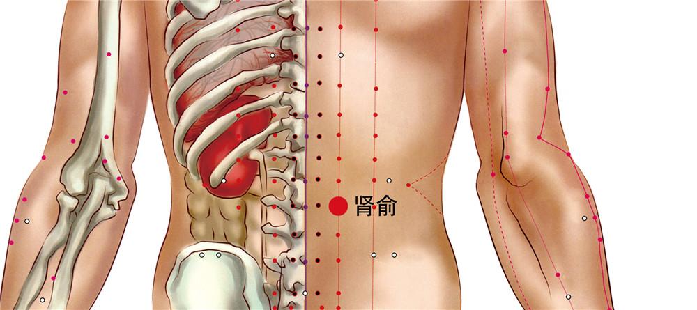 肾俞穴位置图