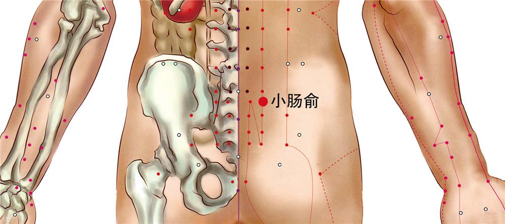 小肠俞穴位置图