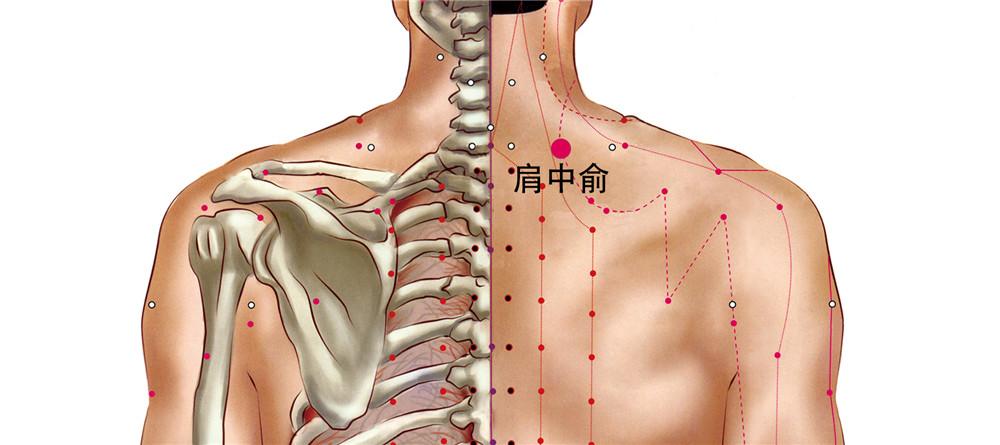 肩中俞穴位置图