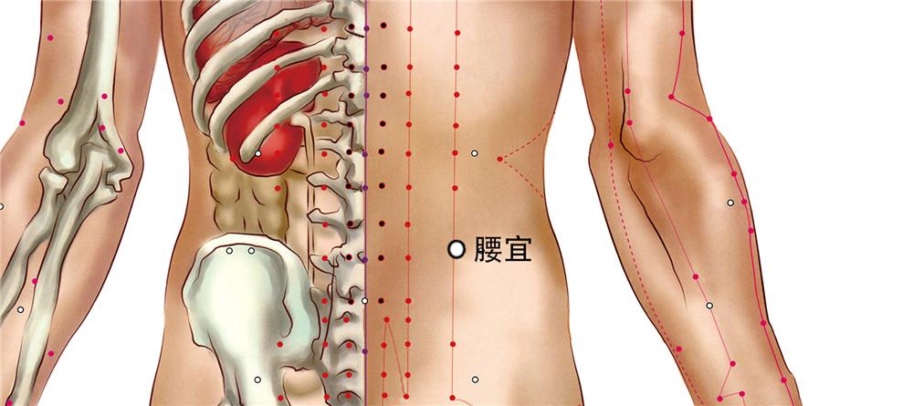 腰宜穴位置图