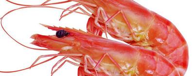 虾的养生功效与搭配食谱