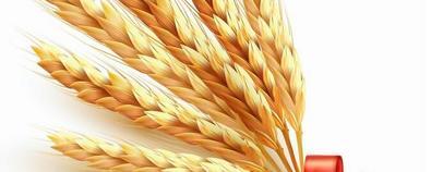 小麦竟然还有这样的养生功效