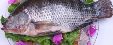 鲫鱼汤味鲜美做法多 更有意想不到的养...