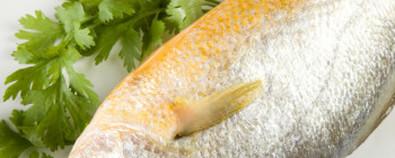 黄花鱼健脾升胃 家常做法清蒸更美味