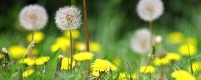 田间地头常见的小野草 还有这样的药用...