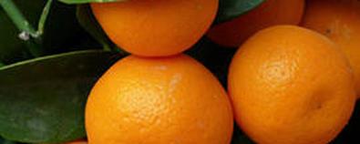 秋季橘子的新吃法 意想不到的养生效果