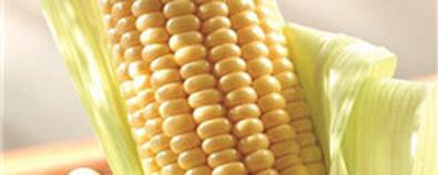 秋天常吃玉米 养生功效贼好