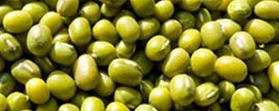 中药绿豆的功效作用与附方