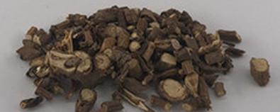 柴胡的形态分布和中药特征