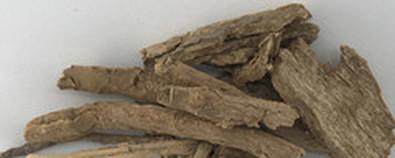 中药地骨皮的功效作用与附方