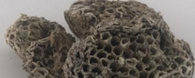 蜂房的功效与作用-用法用量-图片-故...