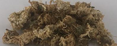 菊花-疏风,清热,明目,解毒