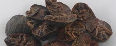 土鳖虫的功效与作用-用法用量-图片-...