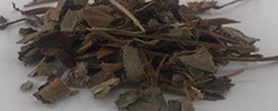 鱼腥草的功效与作用及食用方法-禁忌