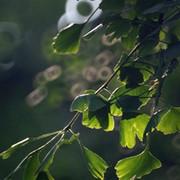 万丈深茎叶